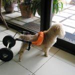 Hundepleje og wellness