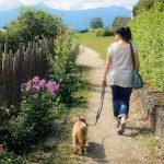 Aktiver din hund og dig selv